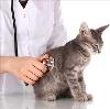 Ветеринарные клиники в Ачису